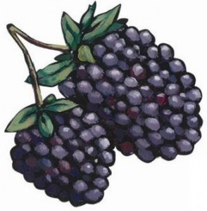 Marionberry